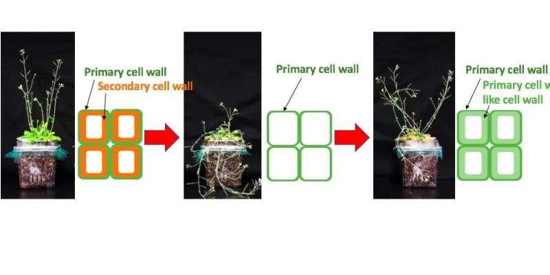 Plantas de ingeniería para un futuro sostenible.