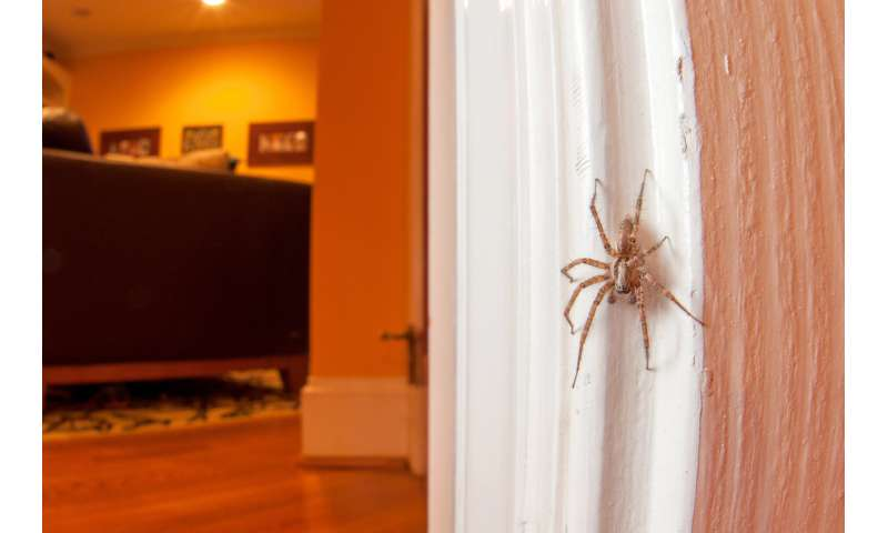 Entomologist explains why you shouldn't kill spiders in your home