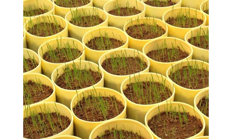 Epidemic in turf management: Herbicide resistance in annual bluegrass