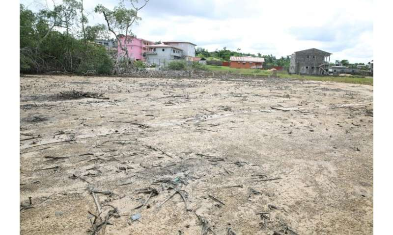 Experts say the destruction of mangroves is depriving the coastal city of a vital ecological reserve and weakening its shield ag