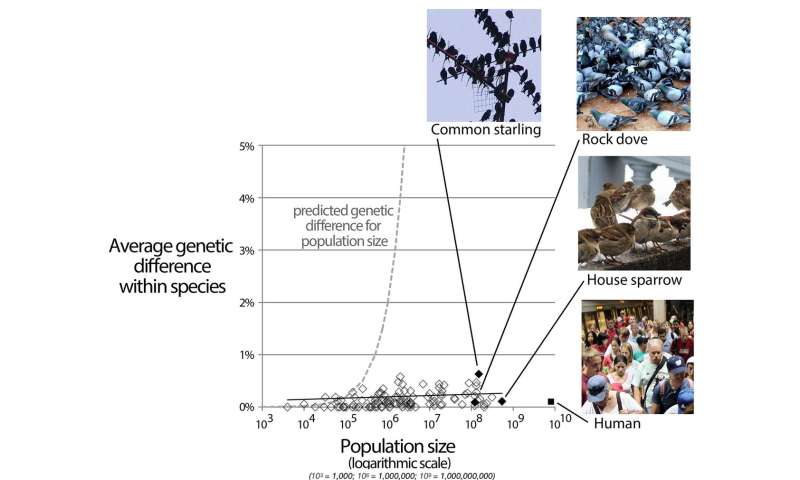 Far from special: Humanity's tiny DNA differences are 'average' in animal kingdom