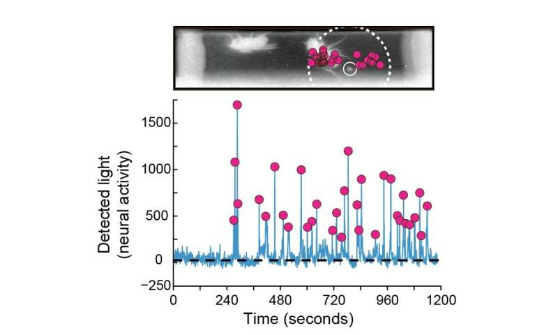 Fecal deposits reveal the fruit fly's pheromone flag