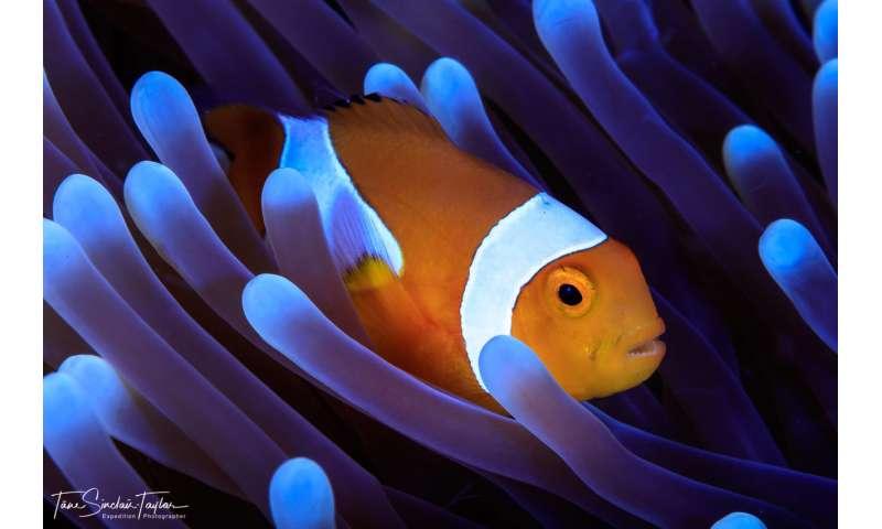 Finding Nemo's genes