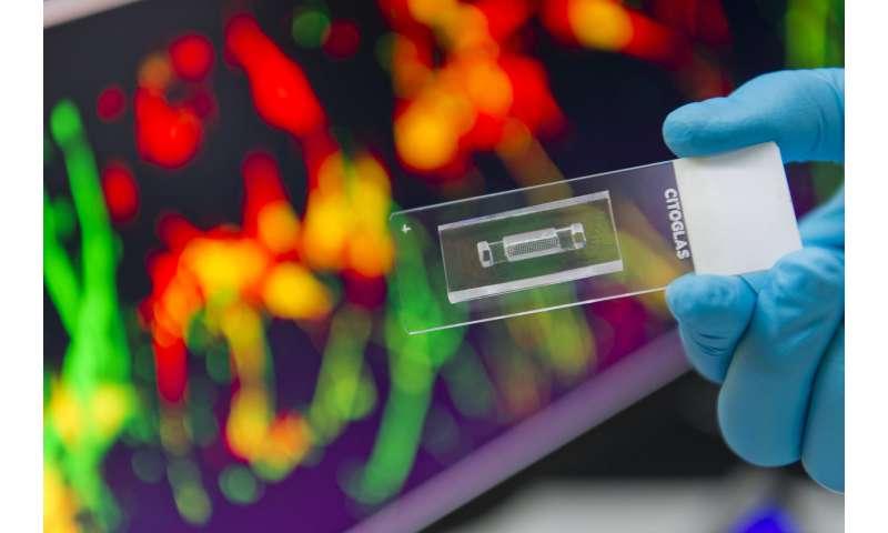 First microarrayed 3D neuronal culture platform developed