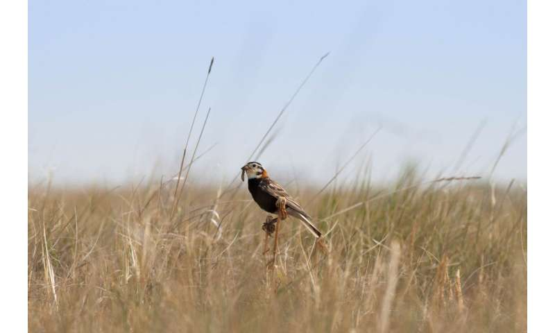 For songbird conservation, it's not the size that matters