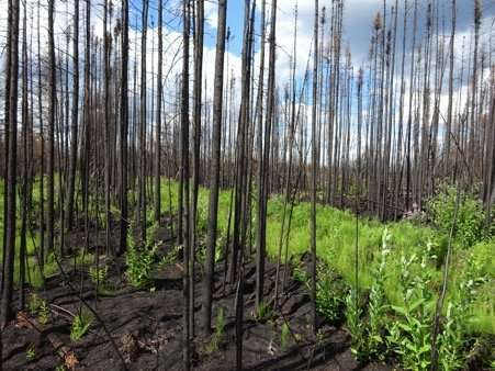 Fort McMurray researchers find simple key to risk of severe peat fires