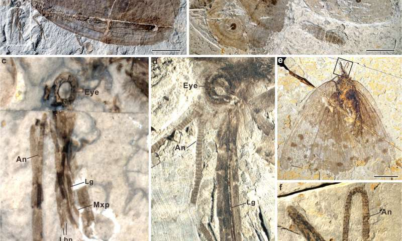 Fossils reveal diverse mesozoic pollinating lacewings