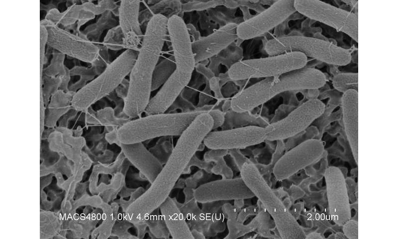 Getting more out of microbes—studying Shewanella in microgravity