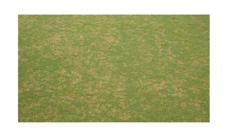 Golf Course Managers Challenged By Fungicide Resistant