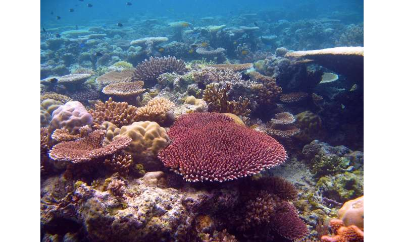 Great Barrier Reef corals can survive global warming for another century