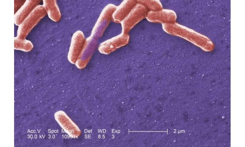 Gut microbes are tiny sensors of your general health