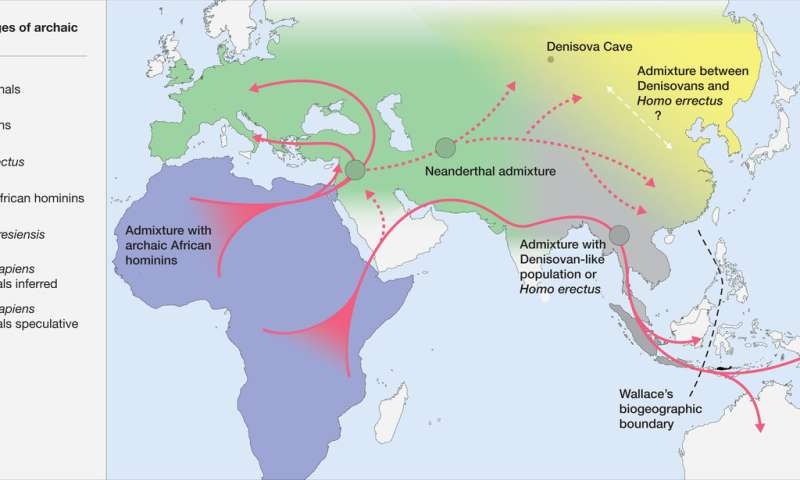 Homo sapiens developed a new ecological niche that separated it from other hominins