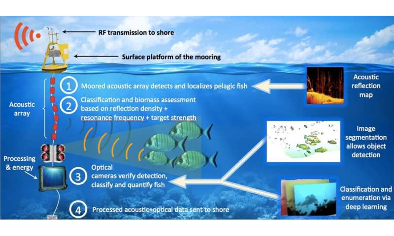 Innovative autonomous system for identifying schools of fish