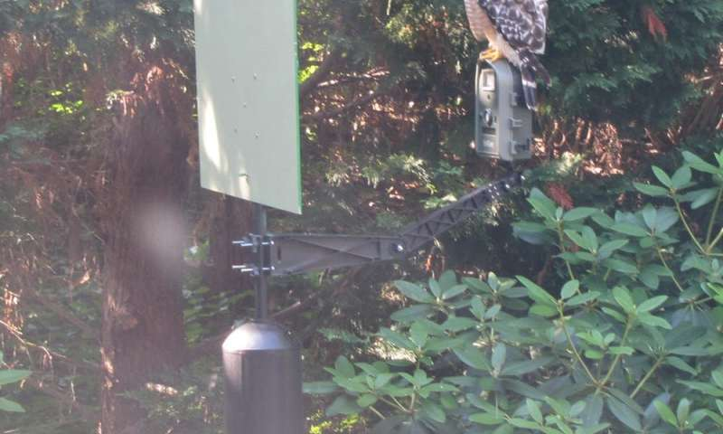 I used facial recognition technology on birds