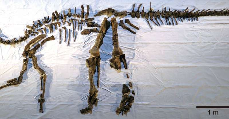 Japan's largest complete dinosaur skeleton comes to life