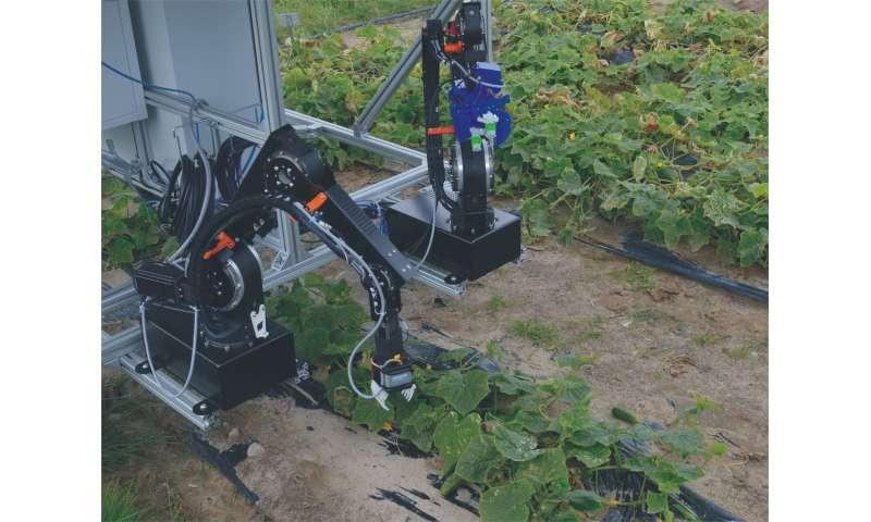 Lightweight robots harvest cucumbers