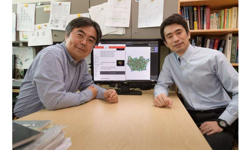 New method for interpreting cryo-EM maps makes it easier to determine protein structures