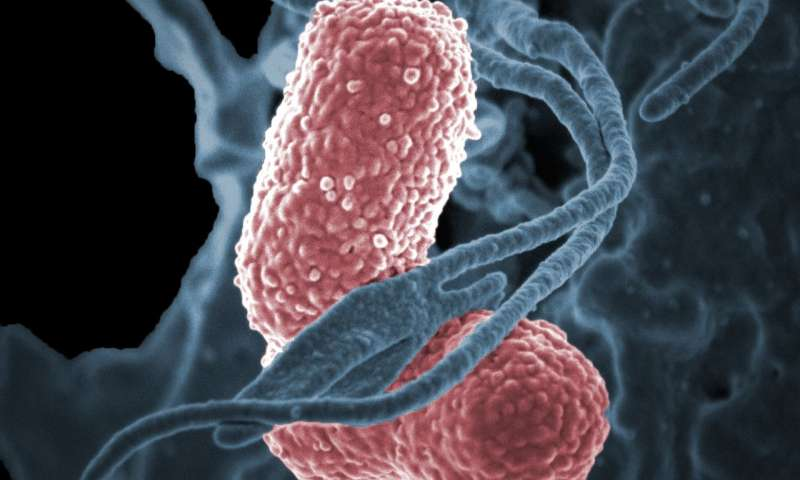 NIH scientists describe potential antibody treatment for multidrug-resistant K. pneumoniae