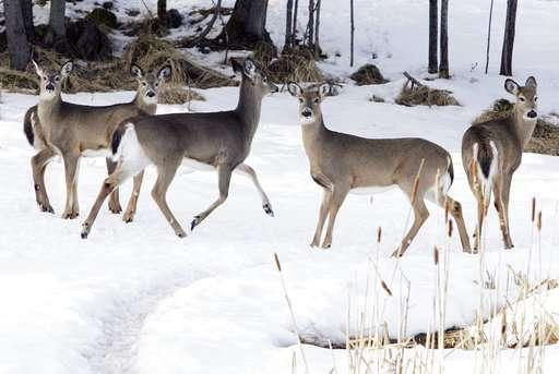 Northeastern US seeks to prevent arrival of deer disease