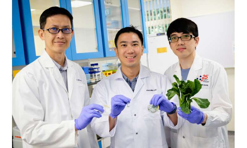 NTU and Harvard scientists discover fat-blocking effect of nanofibers