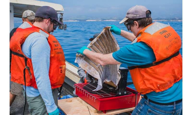 Oleo Sponge successful in real-world conditions off California coast