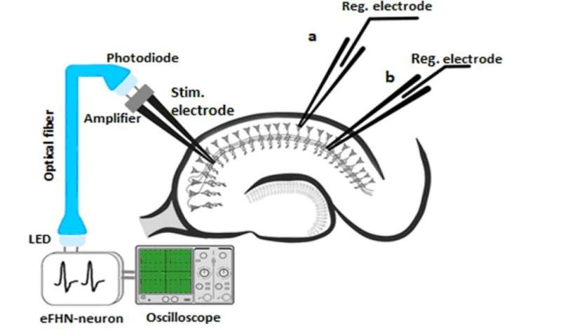 Optoelectronic interface for stimulating neural networks in the brain