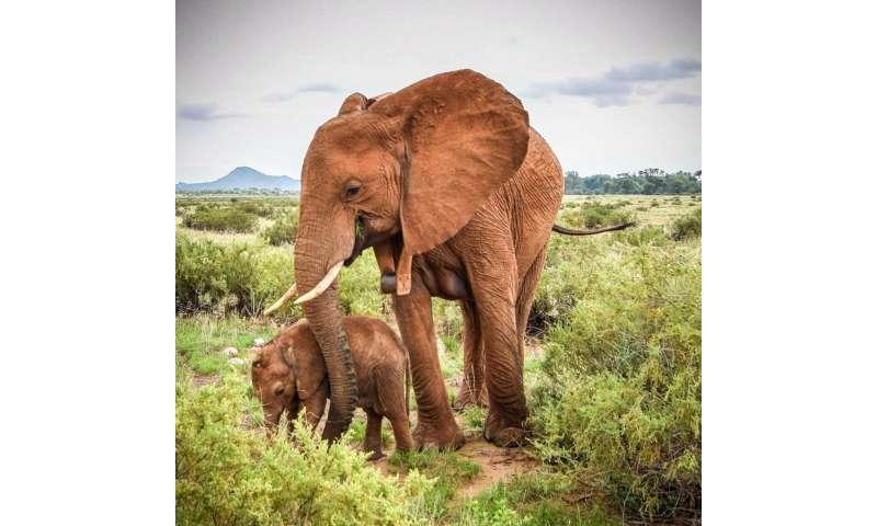 Orphaned elephants have a tougher social life