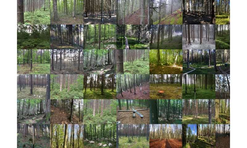 Pollution hits the fungi that nourish European trees