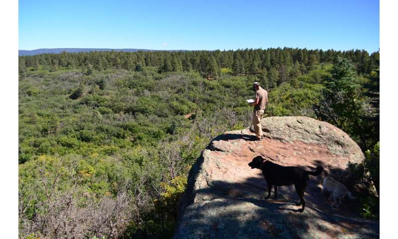 Prehistoric changes in vegetation help predict future of Earth's ecosystems