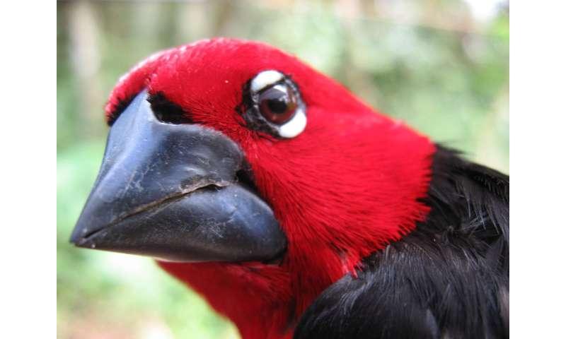 Princeton geneticist solves long-standing finch beak mystery