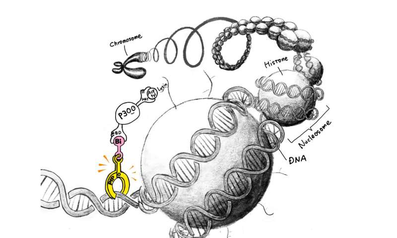 Programming synthetic molecular codes to turn genes 'on'