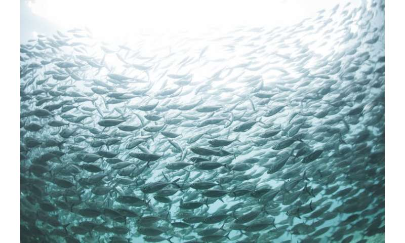 Protecting marine areas may have insidious political effects