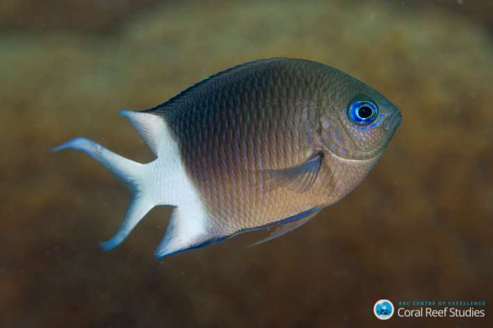 Reef fish inherit tolerance to warming oceans