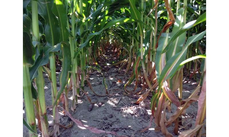 Reining in soil's nitrogen chemistry