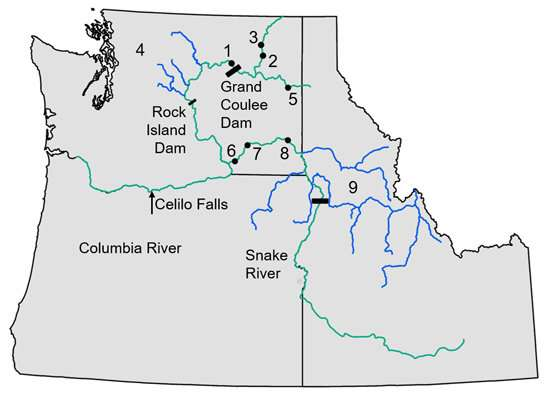 Researchers chart dramatic decline in genetic diversity of Northwest salmon