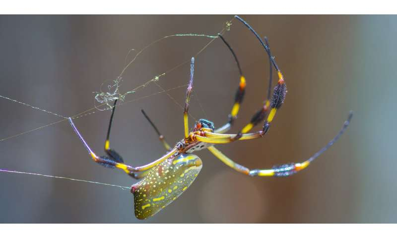 Research on spider glue resolves sticky problem