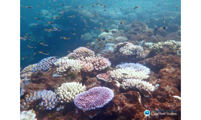 'Robust' corals primed to resist coral bleaching