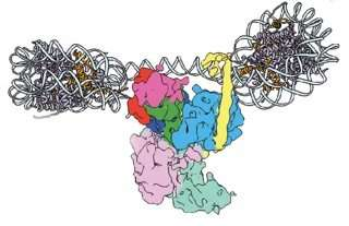 Scientists image molecules vital for gene regulation