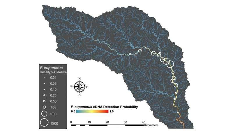 Scientists seeking rare river crayfish aren't just kicking rocks