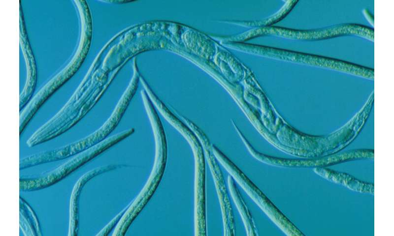 Scientists shed light on biological roots of individuality