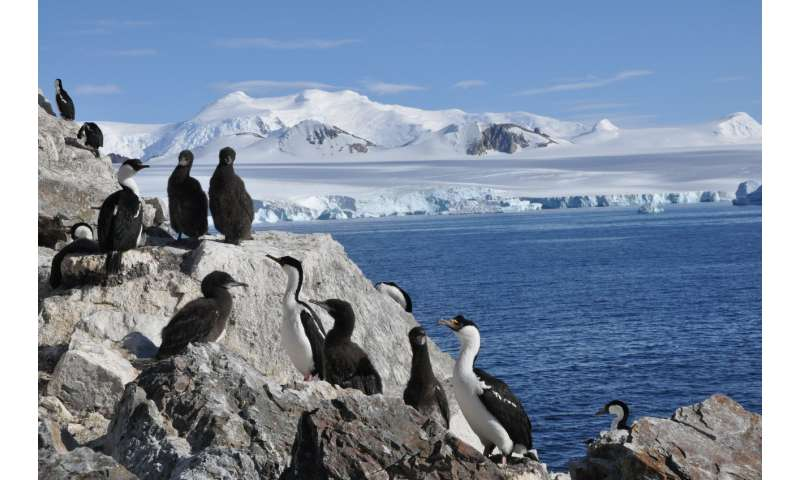 Seabird populations on Antarctic Peninsula unexpected