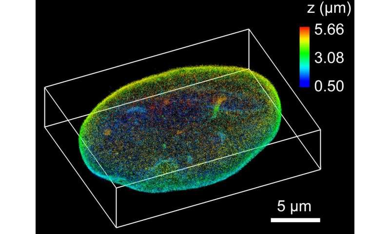 Seeing nanoscale details in mammalian cells