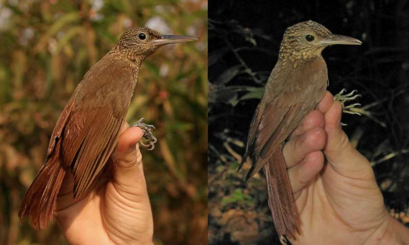 Sister species of birds reveal clues to how biodiversity evolves