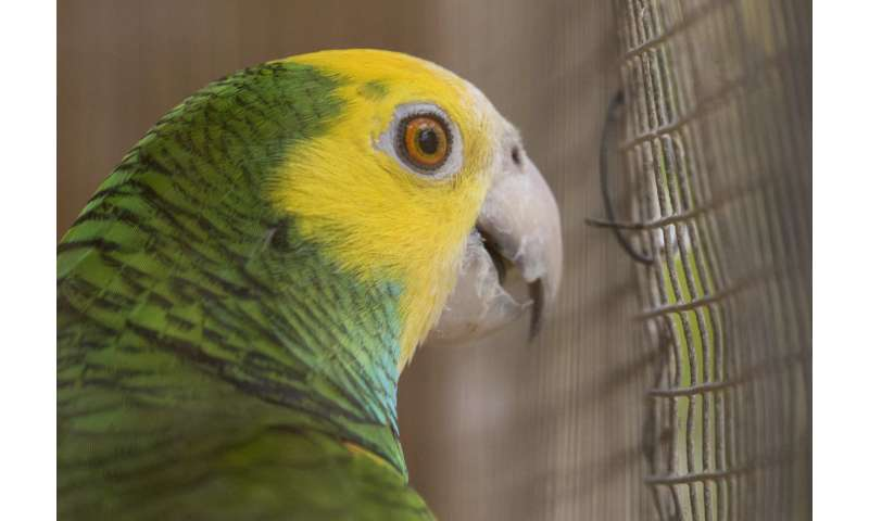 Social marketing campaigns can help threatened wildlife species recover