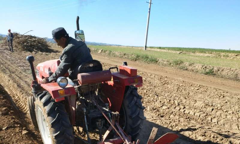 Soil tilling, mulching key to China's potato crop