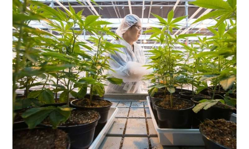 Some experts are predicting a bump in tourism worth billions of dollars when Canada legalizes recreational pot