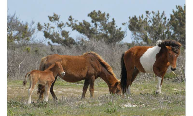 Some prehistoric horses were homebodies