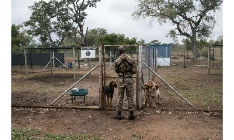 South Africa's Kruger National Park says its detection technologies, sniffer dogs and surveillance aircraft are having an impact