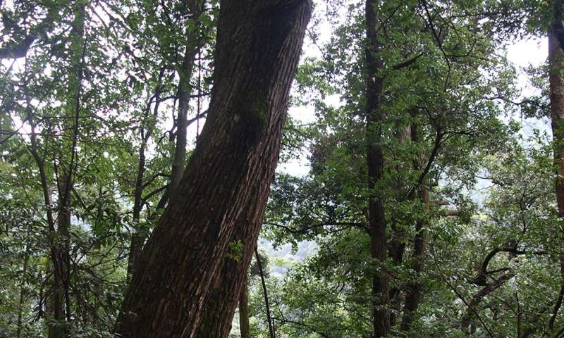 Species-rich forests better compensate environmental impacts
