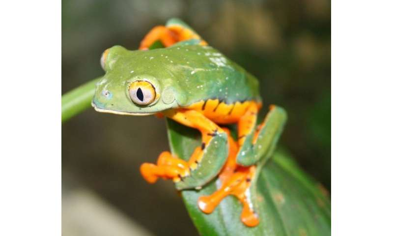 Spectacular frog identified as new species